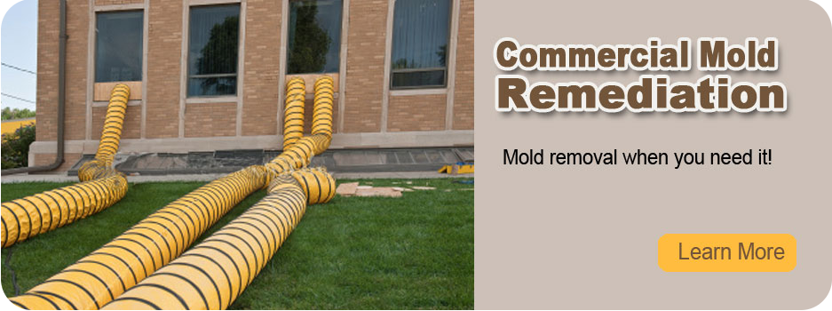 Home page slide show image-3 at Eco Tech Mold - A leading mold inspection company specializing in mold home inspection, residential mold remediation & more.