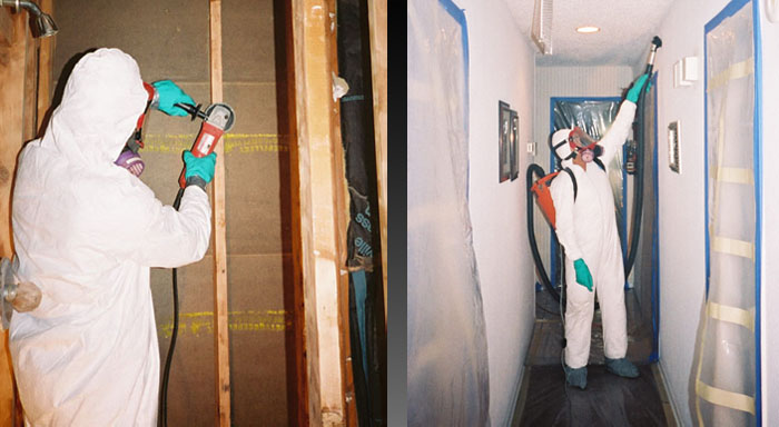 Commercial And Residential Mold Removal In Nj Pa
