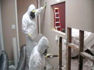 Home Mold Removal Service Philadelphia & NJ